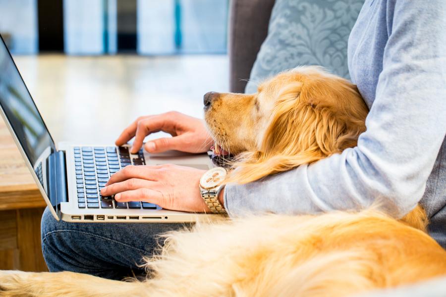 Los beneficios de trabajar cerca de tu mascota